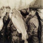Skreimølja – en høyt elsket legende